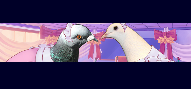 There's now an app for pigeon dating