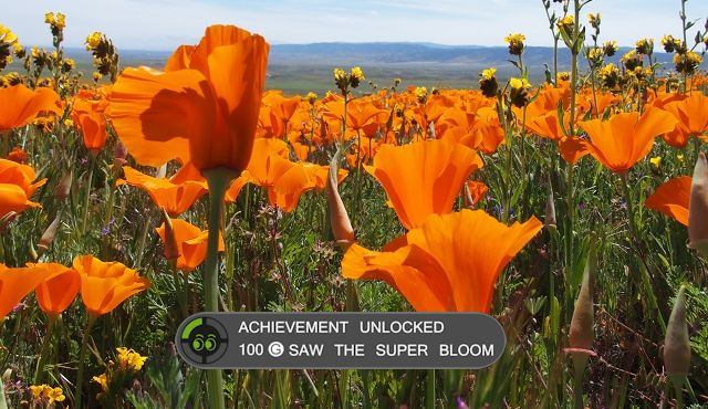 How to see the California Poppy super bloom